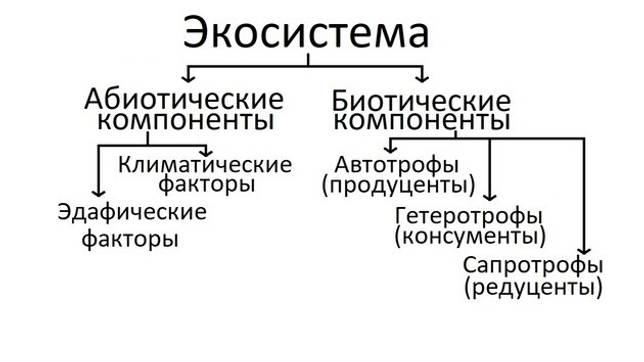 struktura ekosistemi